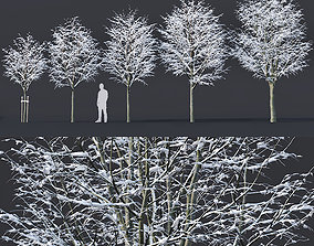 3D Tilia europaea Nr 5 H4-6m Five winter tree set