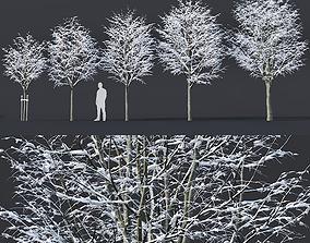 3D Tilia europaea Nr 5 H4-6m Five winter tree set