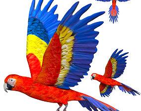 Macaw Parrot 3D asset