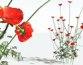 EVERYPlant Field Poppy 06 --20 Models--