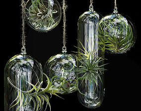 Hanging Air Plants 3D model plant
