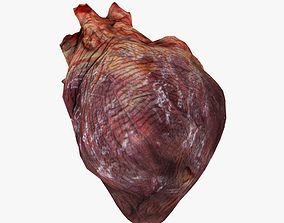 Human Heart 3D model cardiovascular