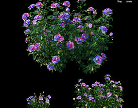 Plant rose set 16 3D