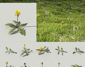 3D dandelion collection