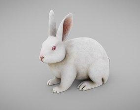 3D asset Rabbit