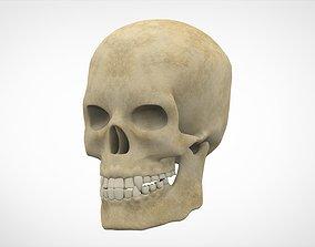 3D model game-ready Human Skull