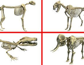 3D African Animal Skeleton Models