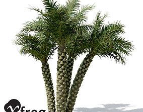 XfrogPlants Silver Date Palm 3D