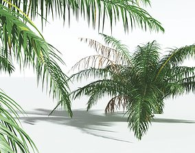 EVERYPlant Seashore Palm 05 --14 Models-- 3D