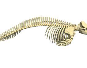 3D Killer Whale Orca Skeleton