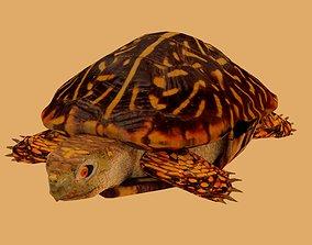 3D model Big Turtle
