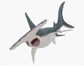 3D model PBR Hammerhead Shark Rigged