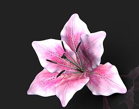 Lily flower 3D model