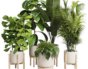 collection Indoor plant 30 -wood vase 3D asset