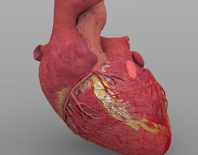 Heart1 with Textures 3D