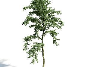 3D model Forest 24 am154
