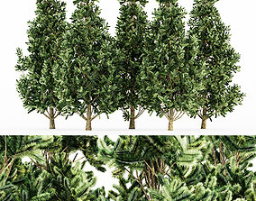 3D model Christmas Scots Pine tree collection 5 trees in 1