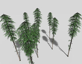 3D asset tall pine tree