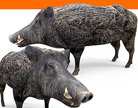 3D Wild Boar Rigged and Animated animated