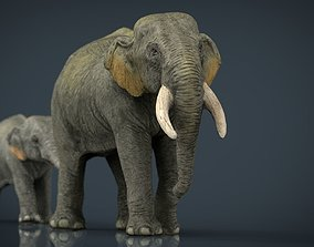 3D model Asians Elephants Mother and Babe