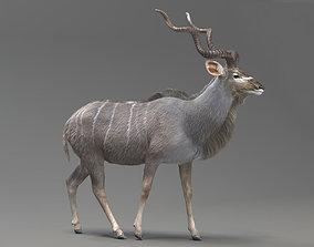 animated strepsiceros Kudu Antelope model