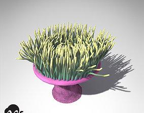 XfrogPlants Magnificent Anemone 3D