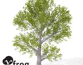 3D XfrogPlants Montpellier Maple