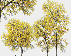 3D Ash-tree 01 02 autumn H13 18m