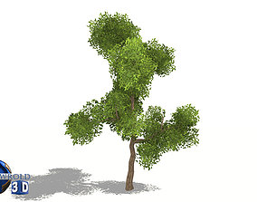 game-ready Realistic green tree lowpoly 3d model