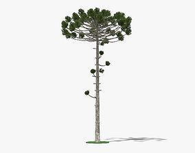 3D model Araucaria