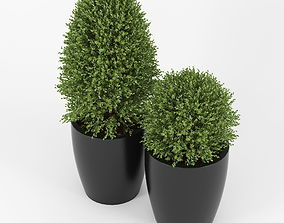 3D model Boxwood