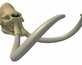 Woolly Mammoth Skull 3D model