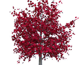 Red Maple Tree Acer Rubrum Low Poly 01 3D asset