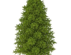 3D model Canadian fir-tree