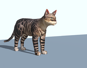 3D model Magic cat