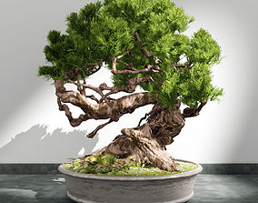 bush bonsai plant 3D