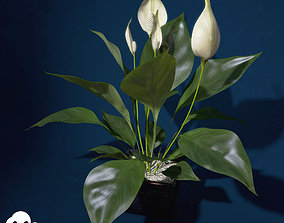 XfrogPlants Peace Lily 3D model