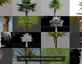3D model Palm trees - Photoscanned collection trunk