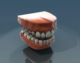 3D Teeth Anatomy