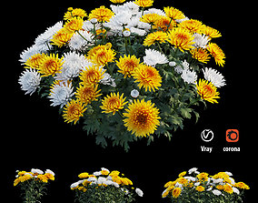 Chrysanthemum flower Plant set 05 3D model