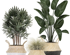 3D Decorative plants in flower pots for the interior 485