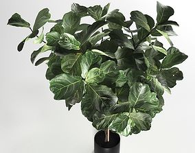 3D model Ficus in Woven Seagrass Basket VR 2
