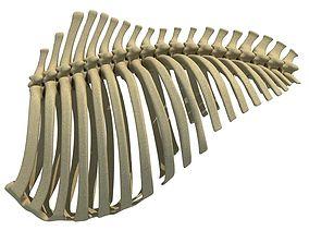 ribs 3D Animal Rib Cage 91