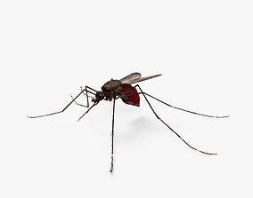 Mosquito HD 3D