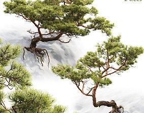 3D model Pine On Rock 01