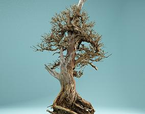 3D model RAW SCAN Dead Bonsai Tree High Poly 05