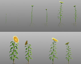 Sunflower seeds grow animation growth 3D model