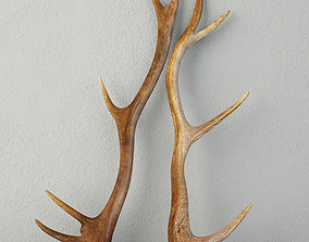 Natural Shed Deer Antlers 3D model