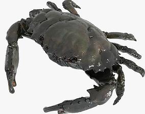 3D asset animated Crab PBR