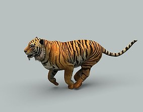 Tiger 3D animated